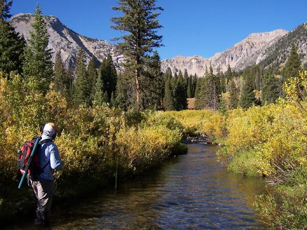 Fly fishing guide service in Jackson Hole & Yellowstone backcountry