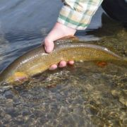 Flat Creek National Elk Refuge Fly Fishing