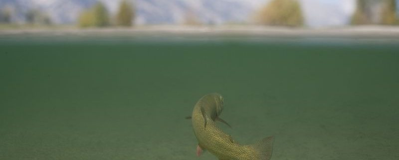 July fly fishing in Jackson Hole WY