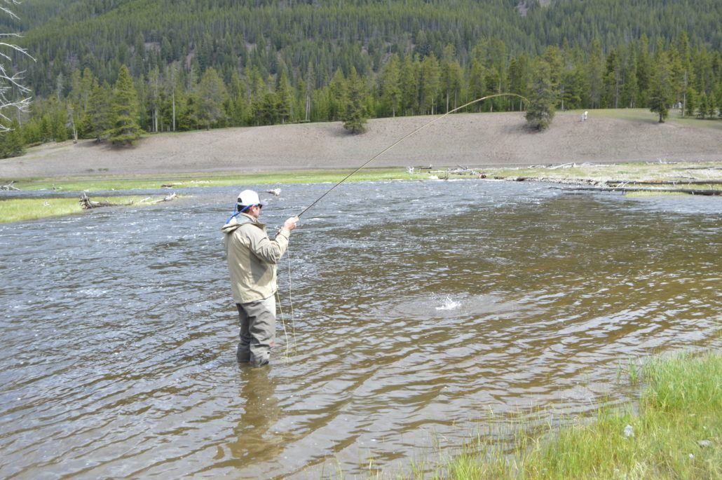 Fish on Firehole River