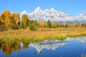 Teton fall color